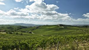 Vignoble de la région Vénétie en Italie